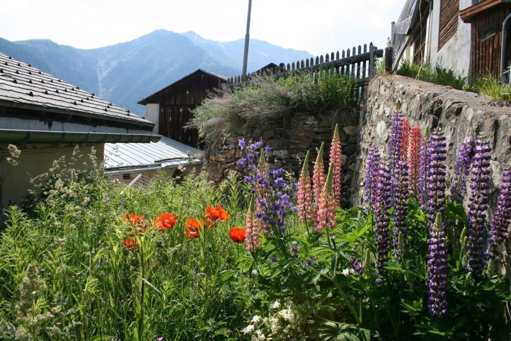 voller Blüte der unverwechselbare Ort Guarda
