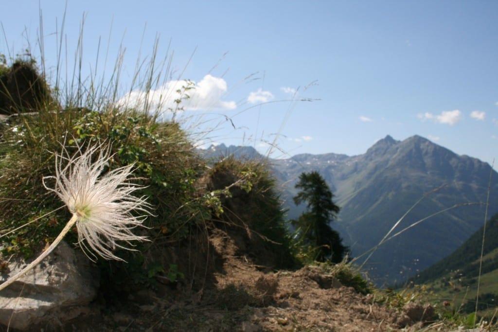 auf der Anhöhe kurz vor Alp Sura mit Blick auf Piz Luna.