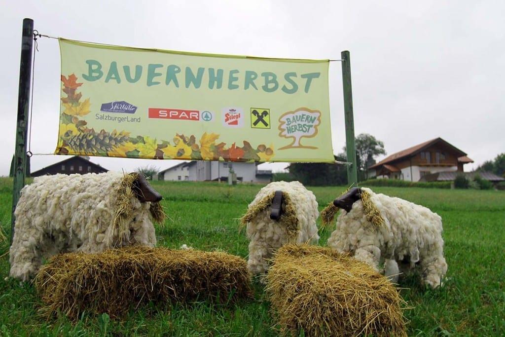 Fuschlsee im Salzburger Land in Österreich