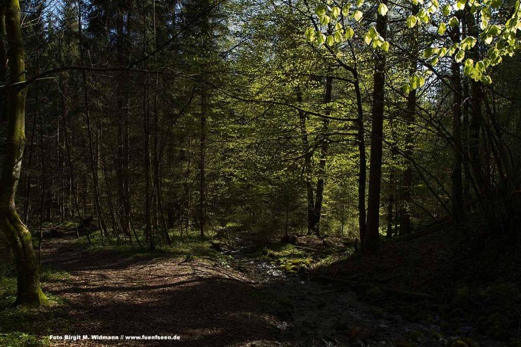 der Auenwald in der Ammerschlucht bei der Wanderung zu den Schleierfällen