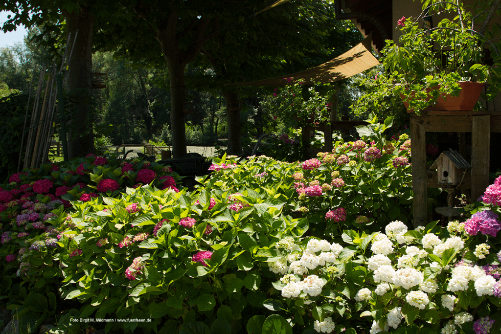 Agriturismo La Roggia im Garten